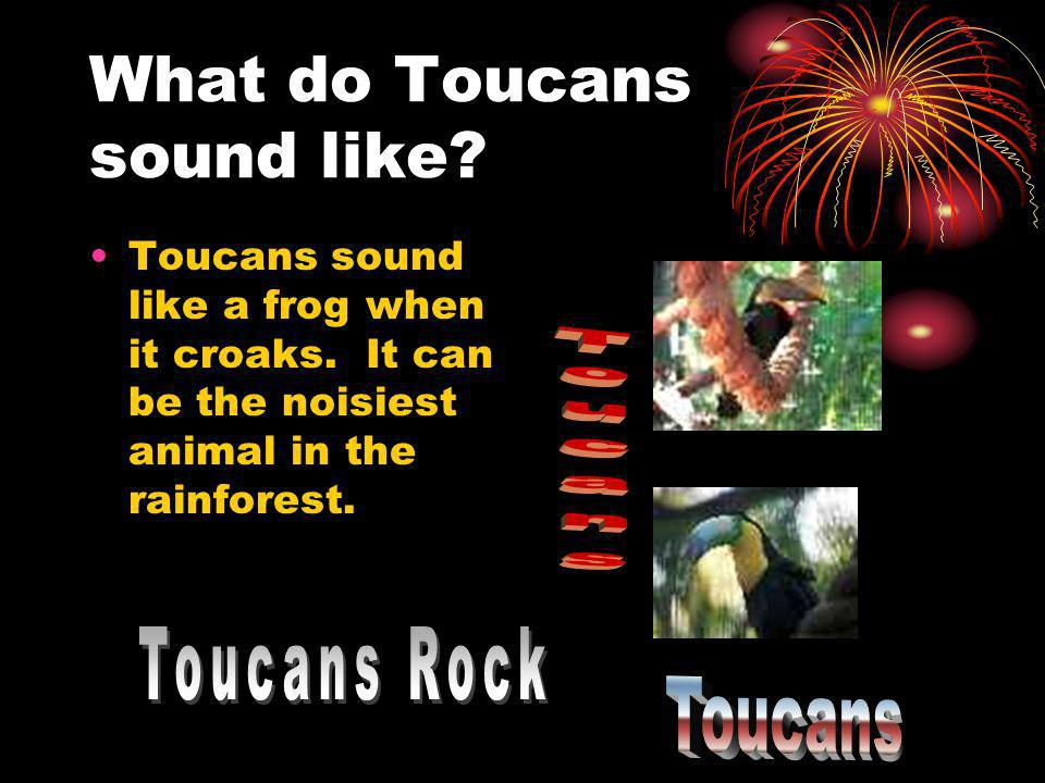 What do Toucans sound like