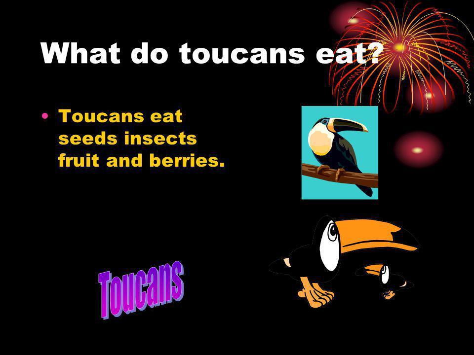 What do toucans eat Toucans