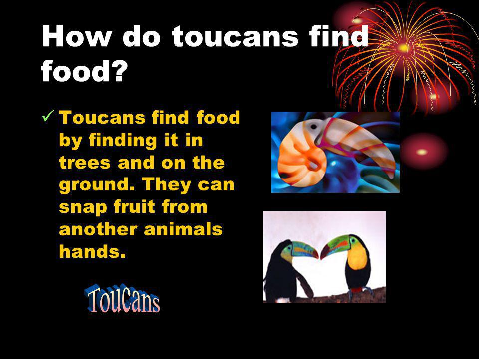 How do toucans find food