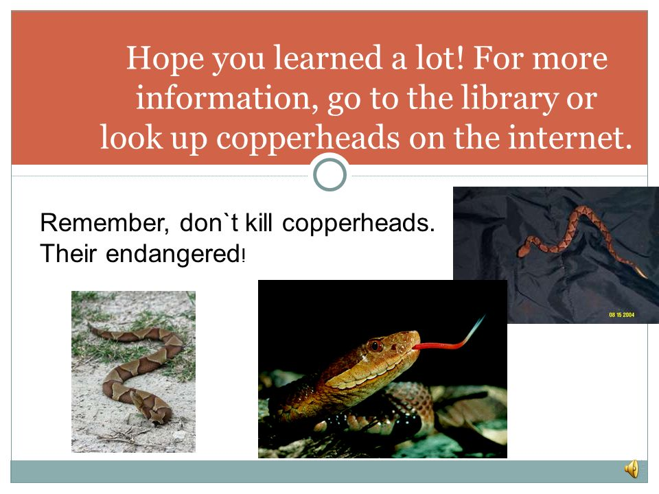 Hope you learned a lot! For more information, go to the library or look up copperheads on the internet.