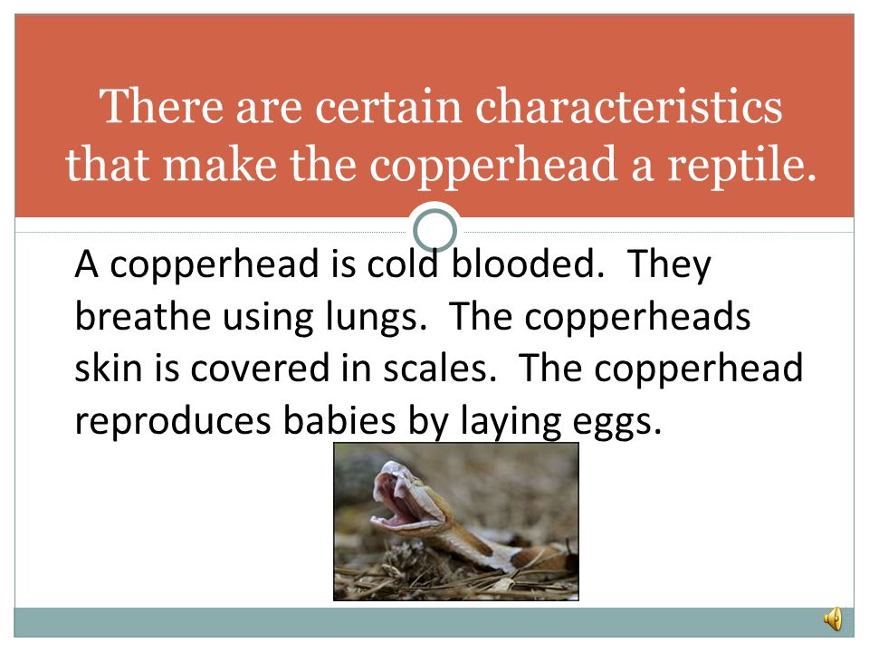 There are certain characteristics that make the copperhead a reptile.