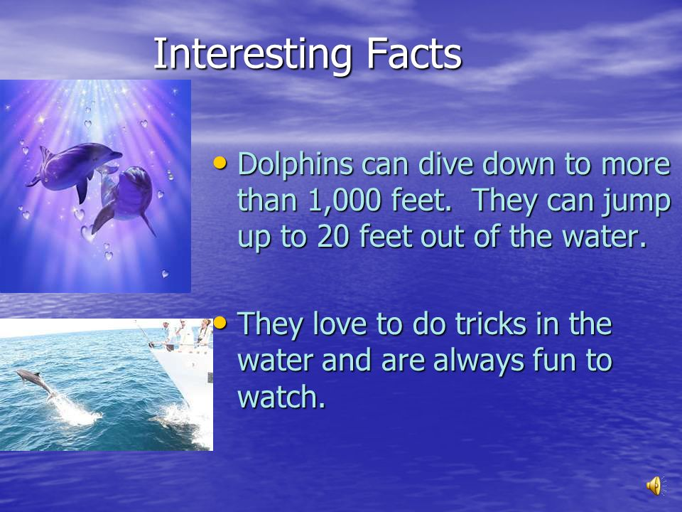 Interesting Facts Dolphins can dive down to more than 1,000 feet. They can jump up to 20 feet out of the water.