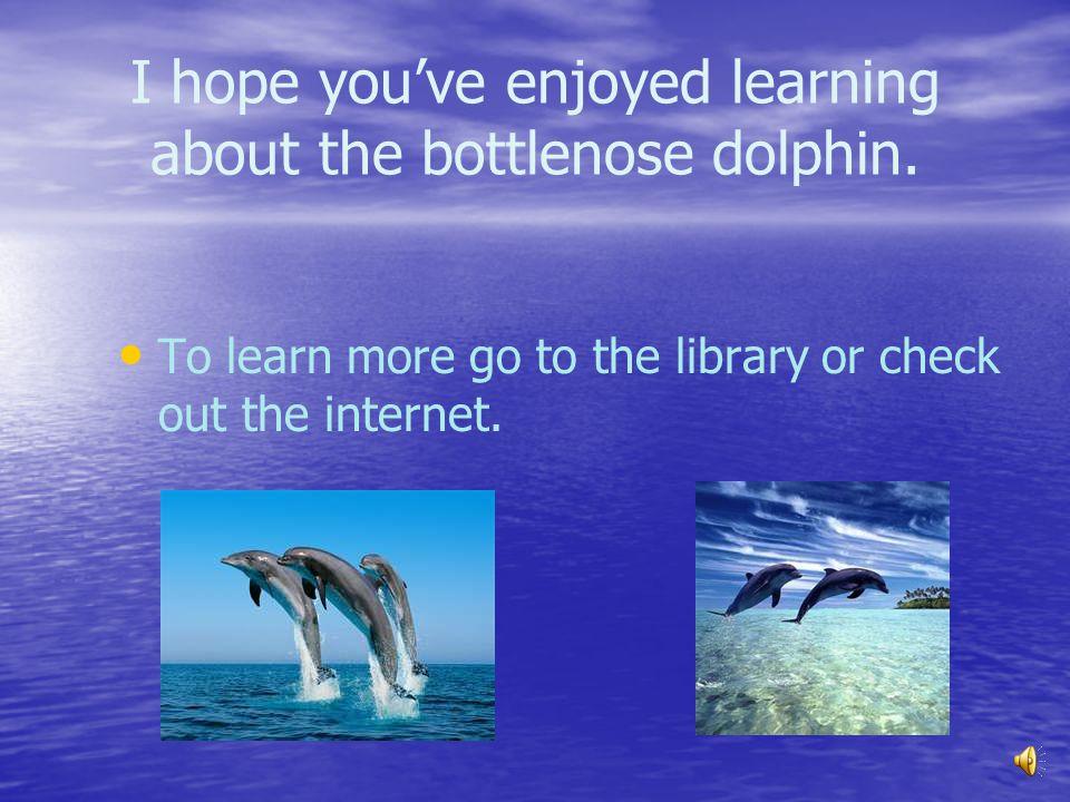 I hope you've enjoyed learning about the bottlenose dolphin.