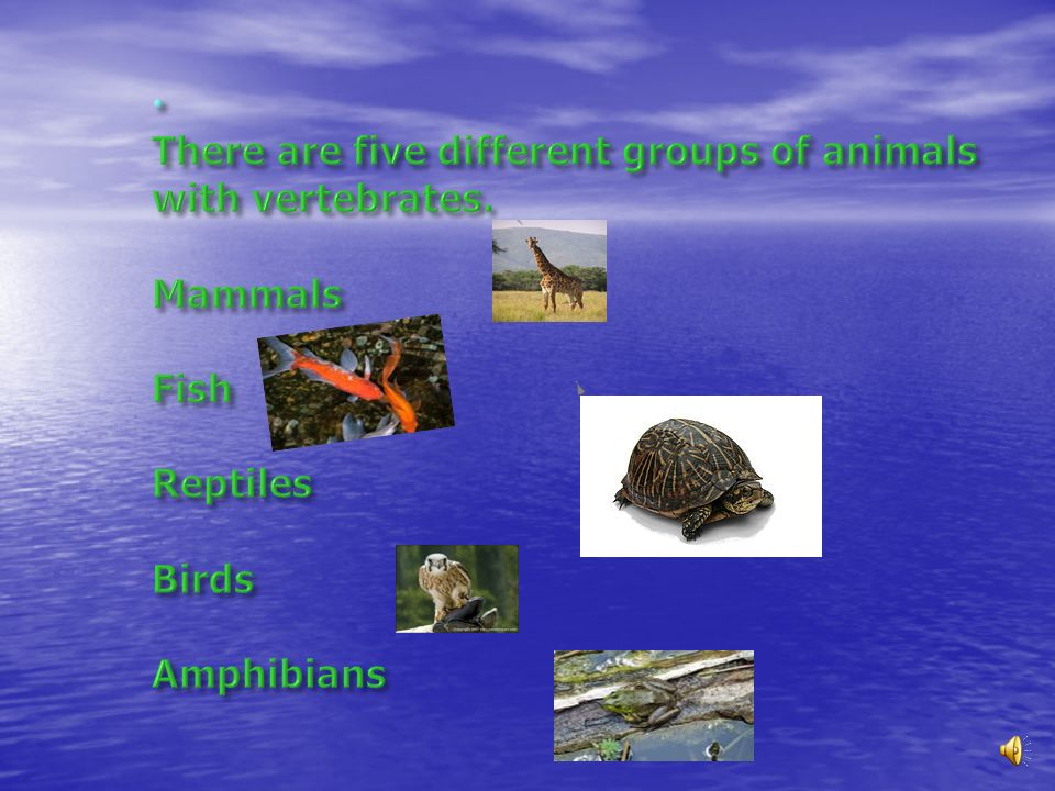 There are five different groups of animals with vertebrates