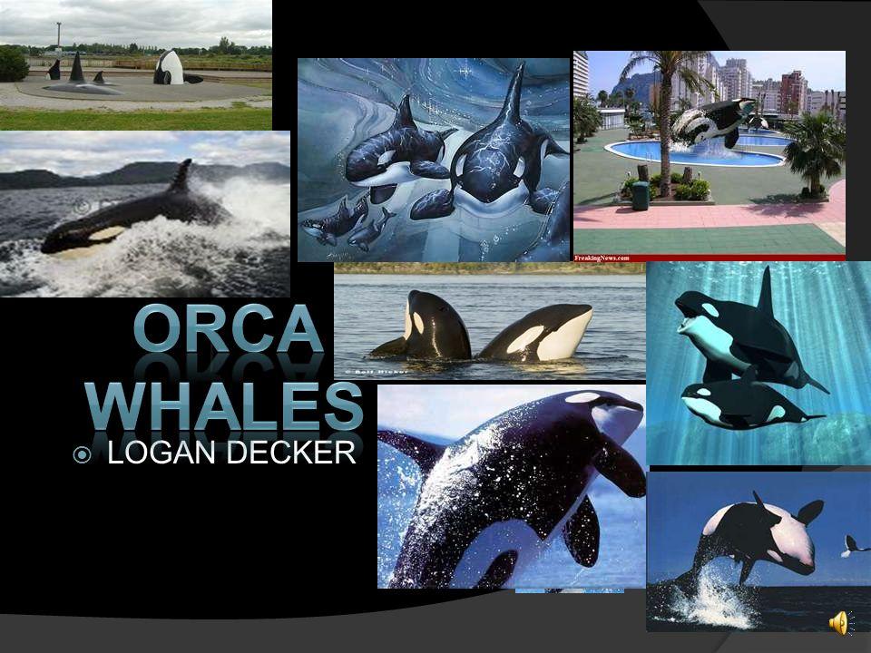 orca whales r Logan LOGAN DECKER