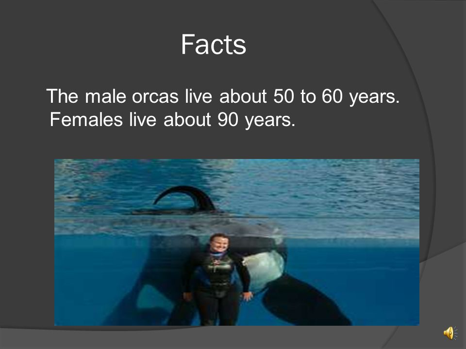 Facts The male orcas live about 50 to 60 years. Females live about 90 years.