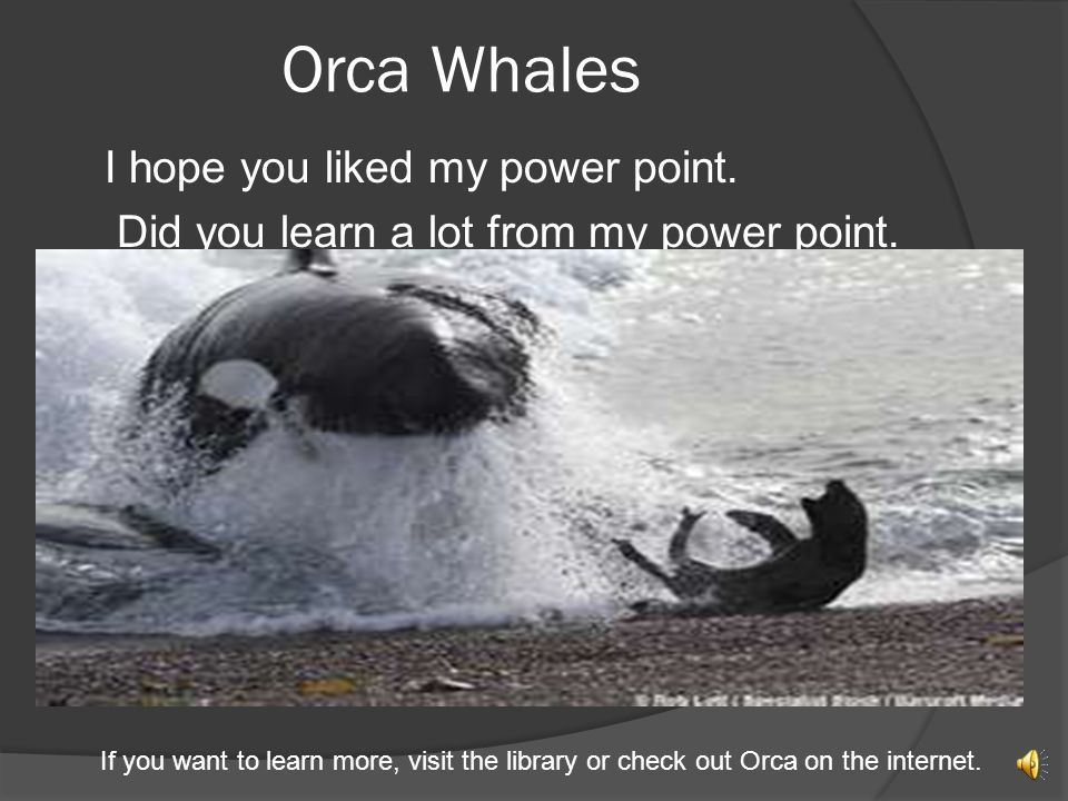 Orca Whales I hope you liked my power point.