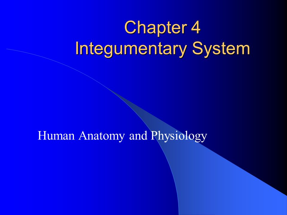 Chapter 4 Integumentary System - ppt download