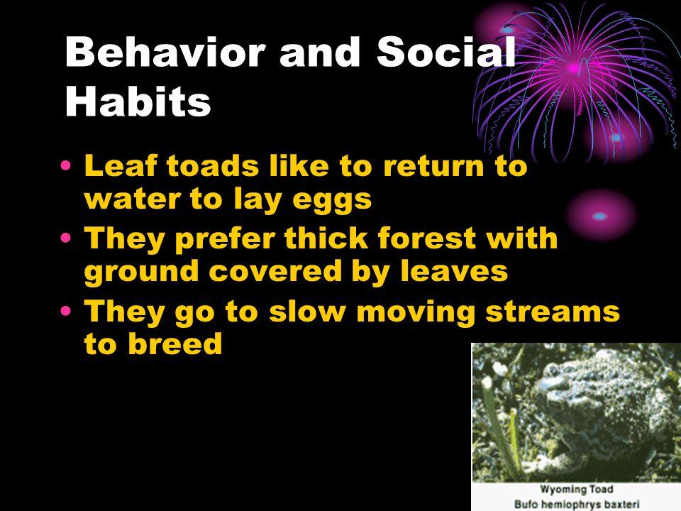 Behavior and Social Habits