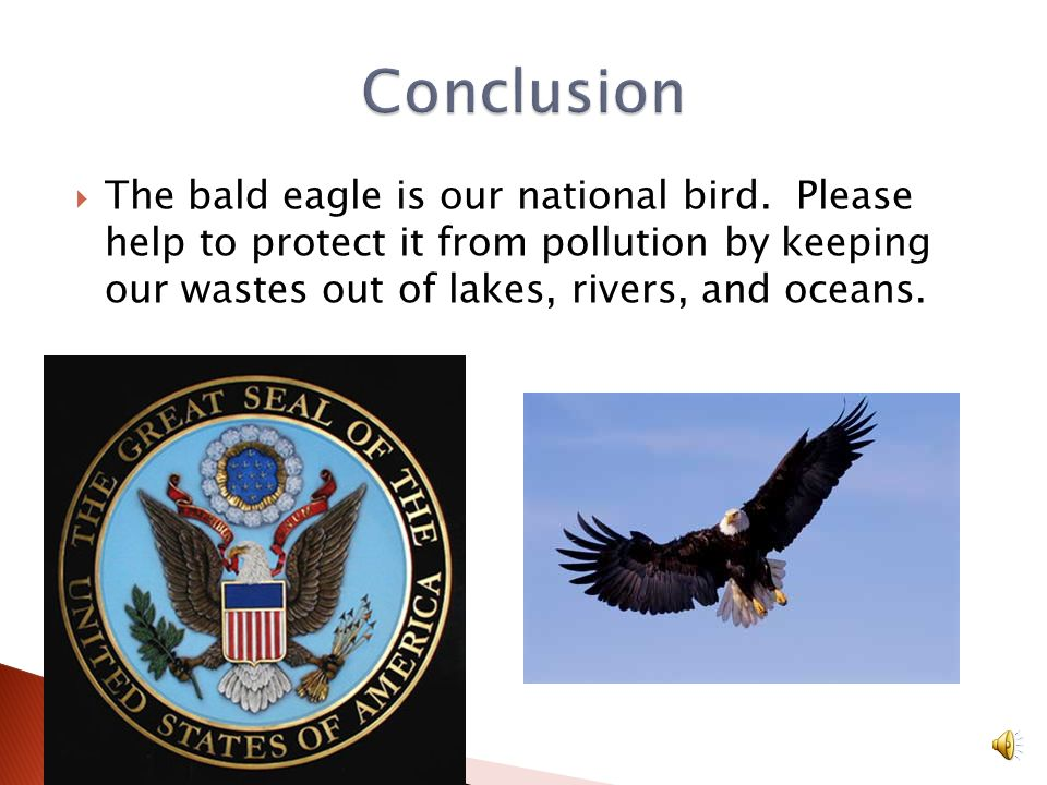Conclusion The bald eagle is our national bird.