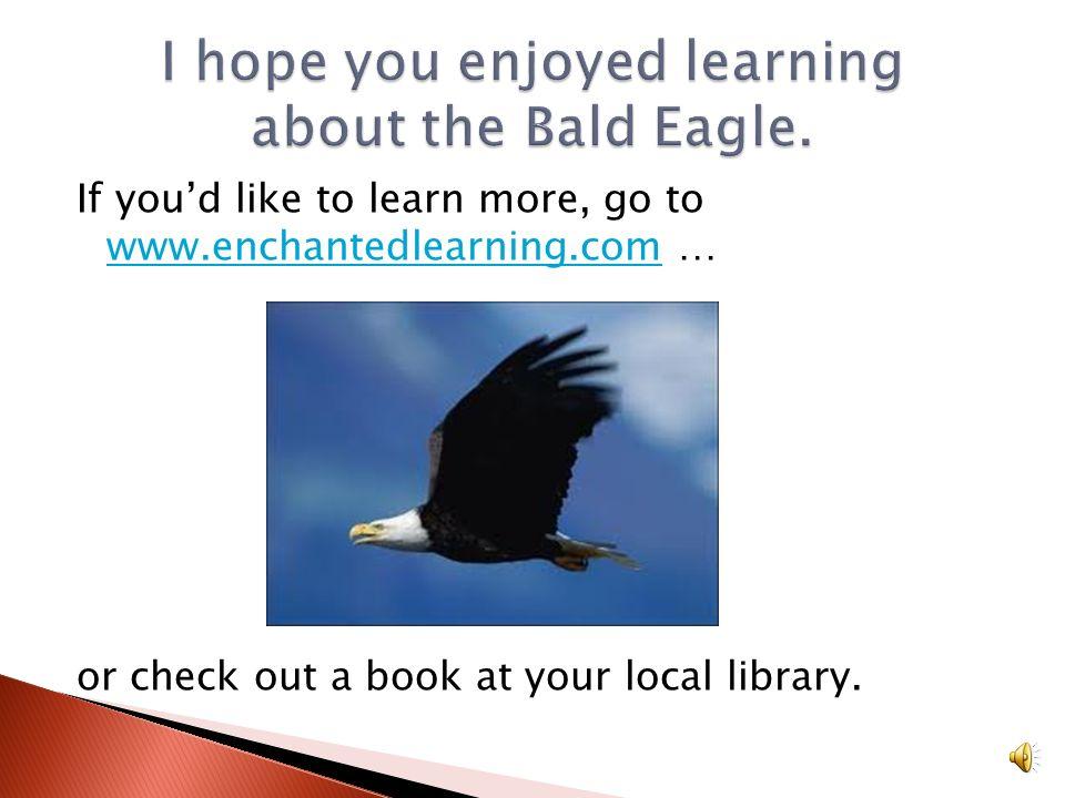 I hope you enjoyed learning about the Bald Eagle.