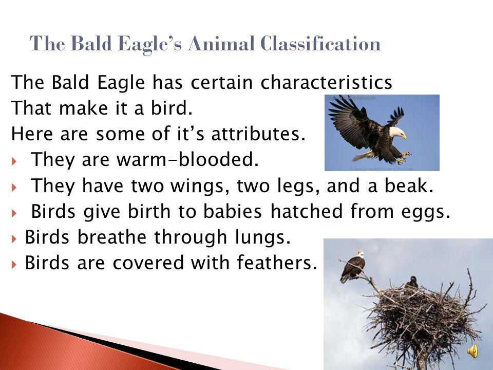 The Bald Eagle's Animal Classification