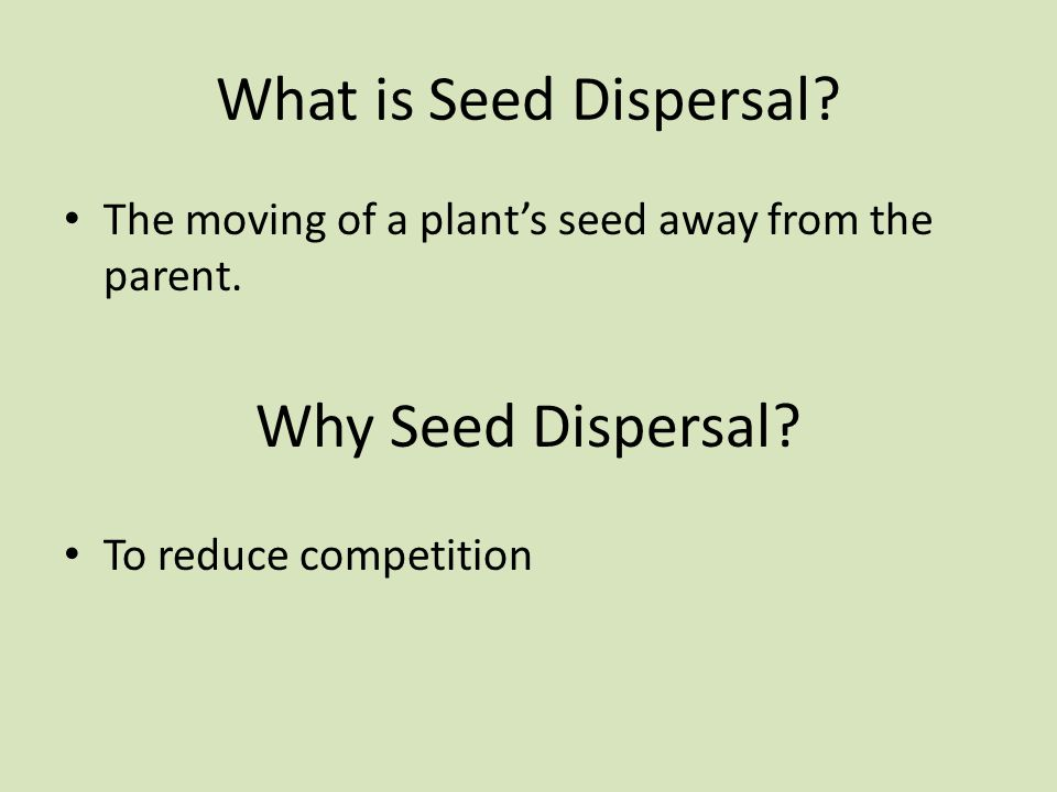 What is Seed Dispersal Why Seed Dispersal