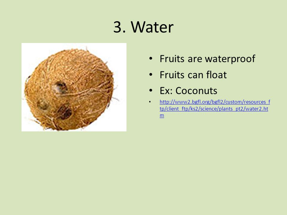 3. Water Fruits are waterproof Fruits can float Ex: Coconuts