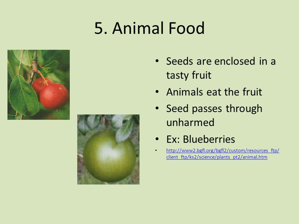 5. Animal Food Seeds are enclosed in a tasty fruit