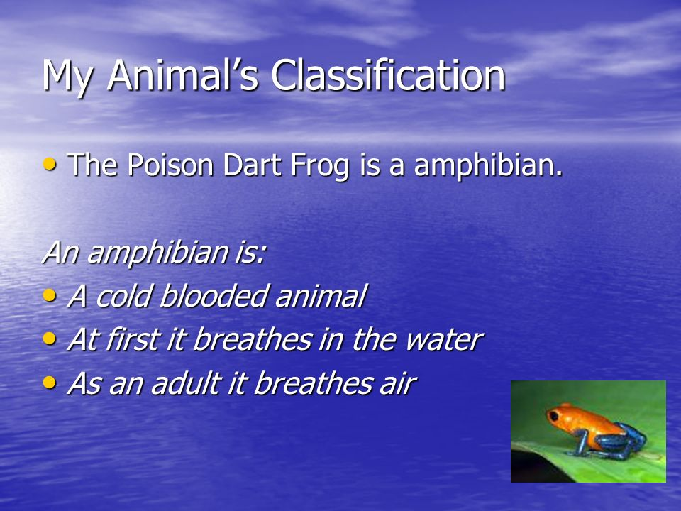 My Animal's Classification