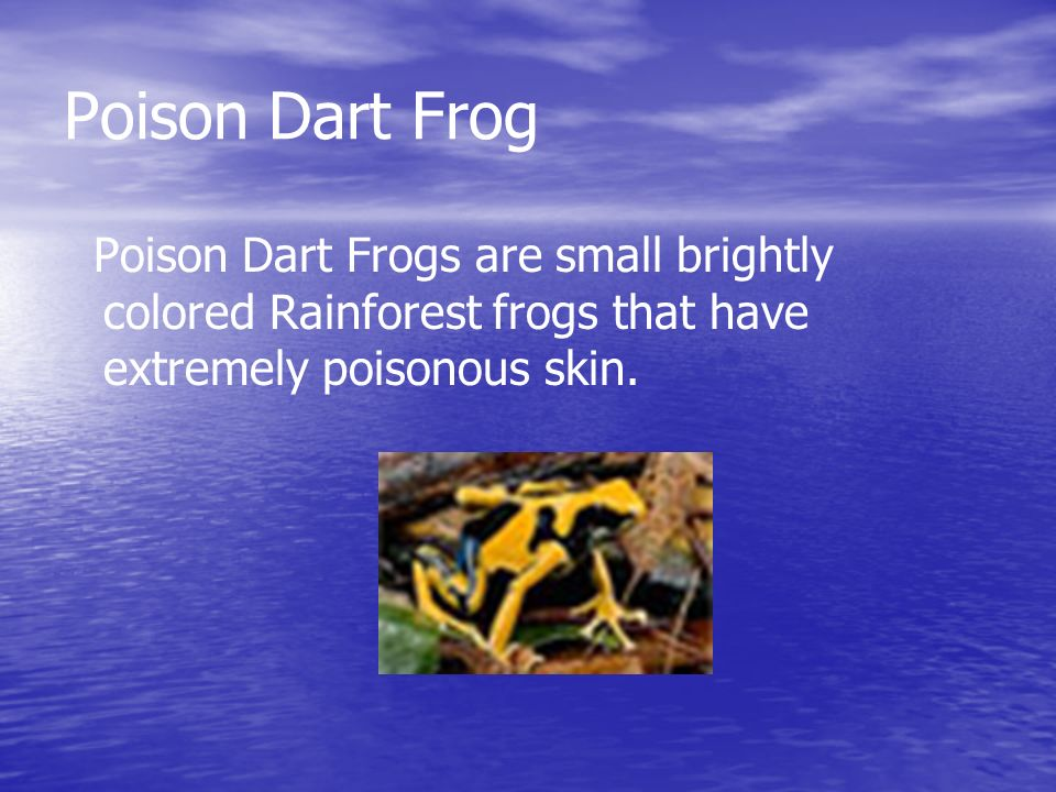 Poison Dart Frog Poison Dart Frogs are small brightly colored Rainforest frogs that have extremely poisonous skin.