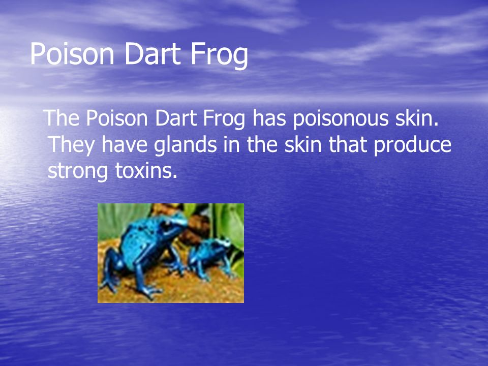 Poison Dart Frog The Poison Dart Frog has poisonous skin.