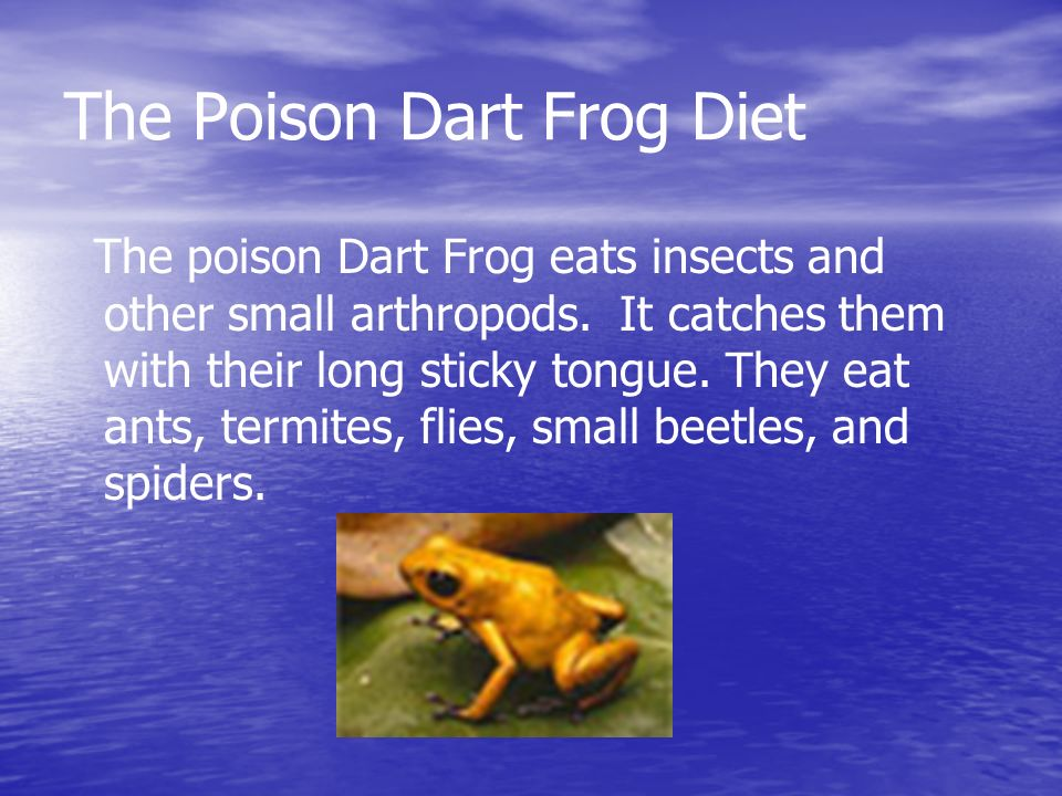 The Poison Dart Frog Diet