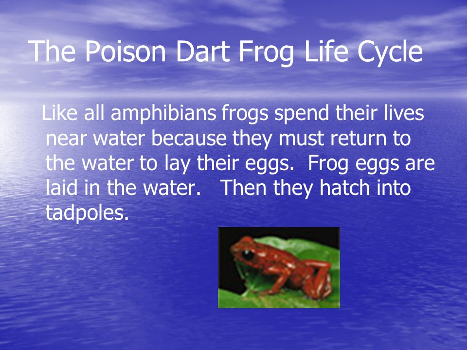 The Poison Dart Frog Life Cycle