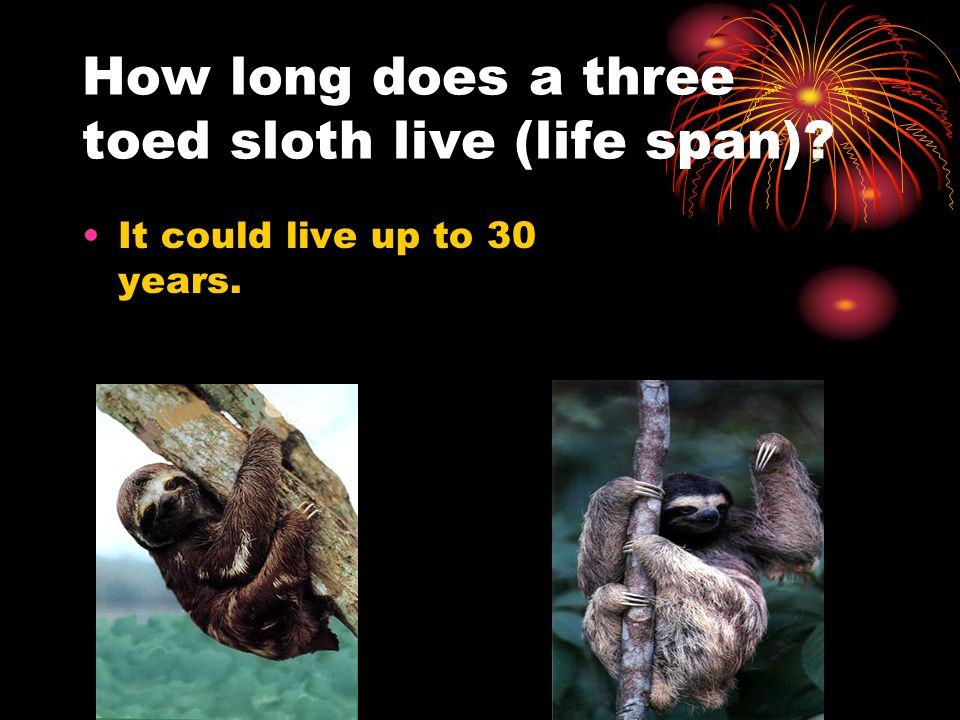 How long does a three toed sloth live (life span)
