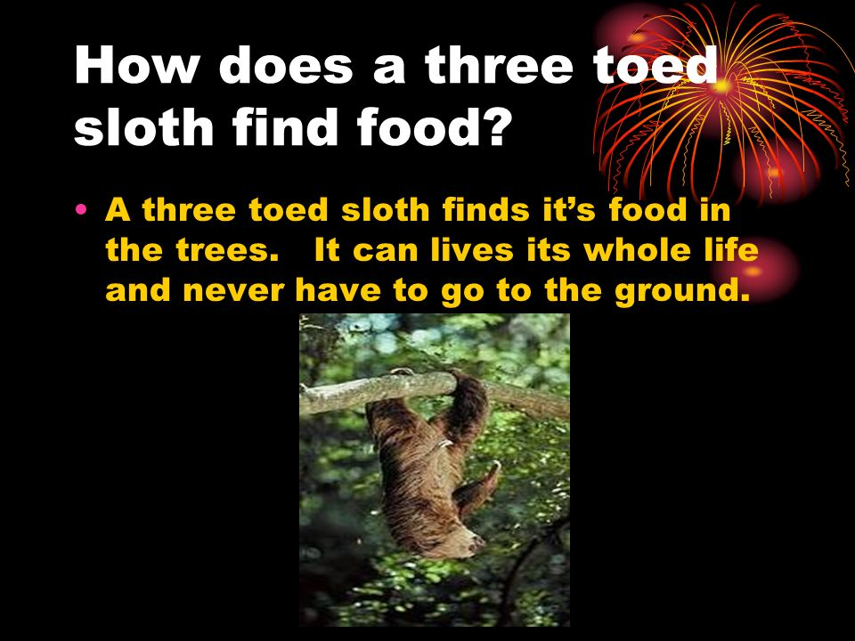 How does a three toed sloth find food