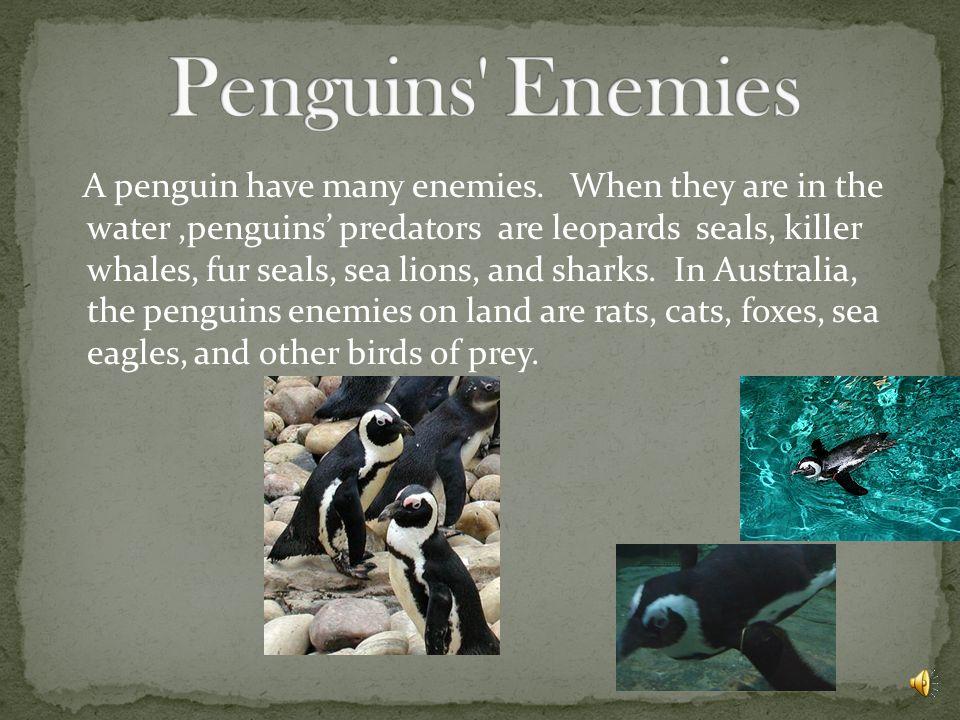 Penguins Enemies