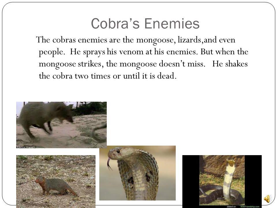 Cobra's Enemies
