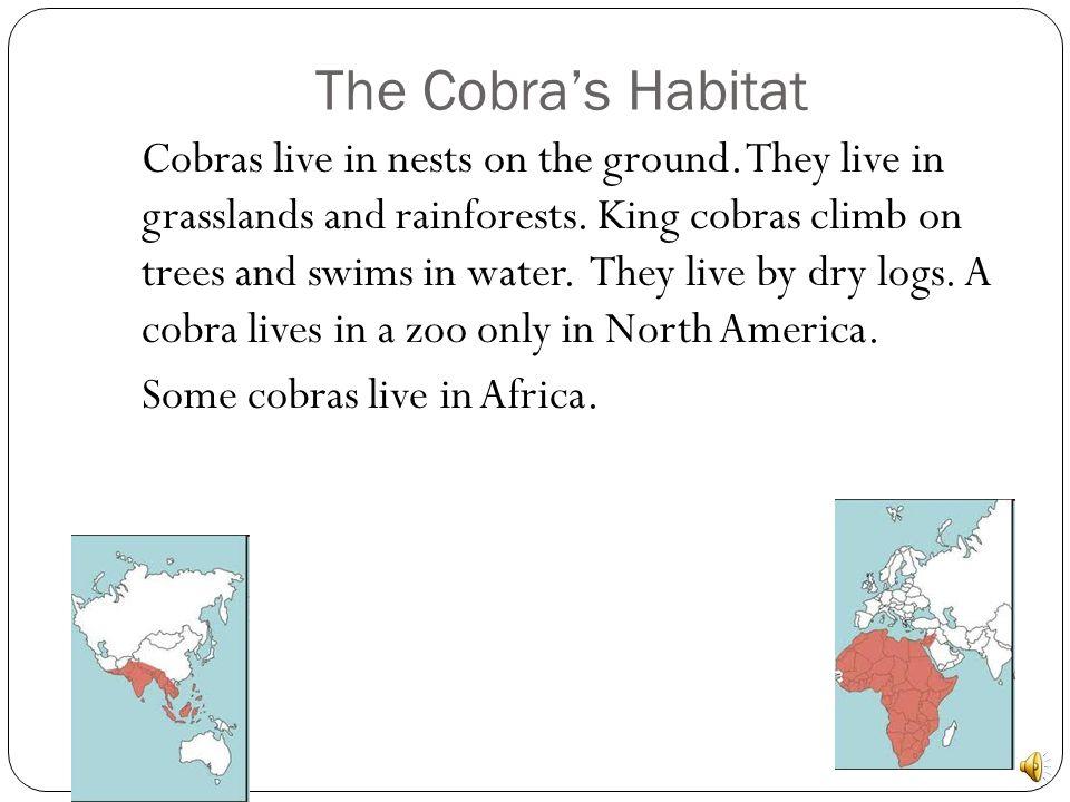 The Cobra's Habitat