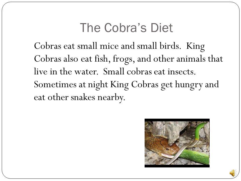 The Cobra's Diet
