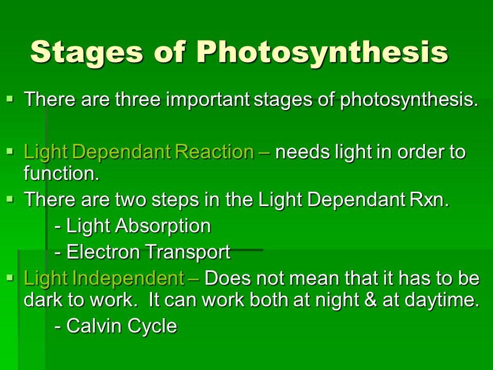 the two stages of photosynthesis Free photosynthesis process review study chloroplasts, the chemical equation, chlorophyll and the light and dark stages of photosynthesis.