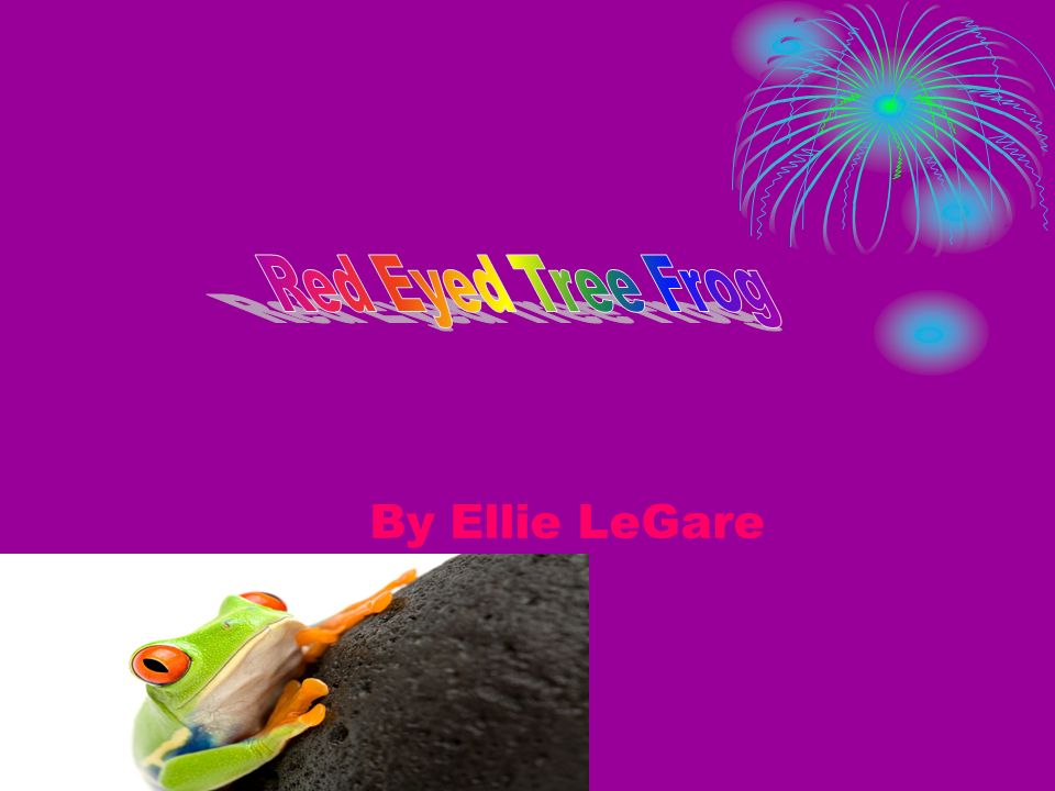 Red Eyed Tree Frog By Ellie LeGare
