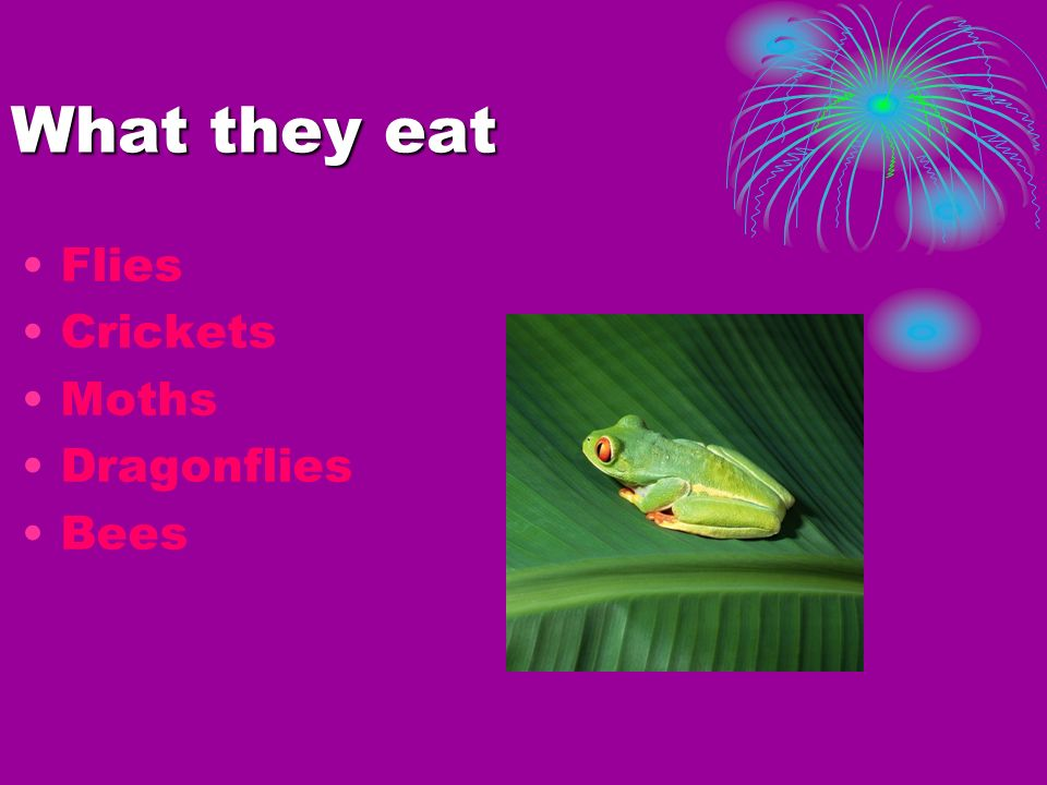What they eat Flies Crickets Moths Dragonflies Bees