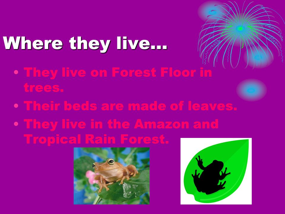 Where they live… They live on Forest Floor in trees.