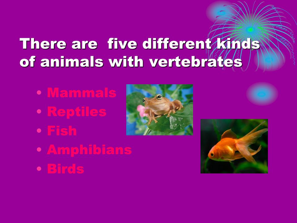 There are five different kinds of animals with vertebrates