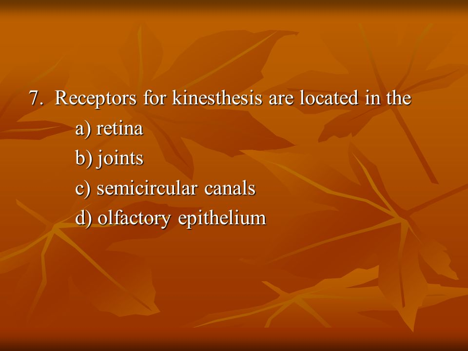 For kinesthesis are located