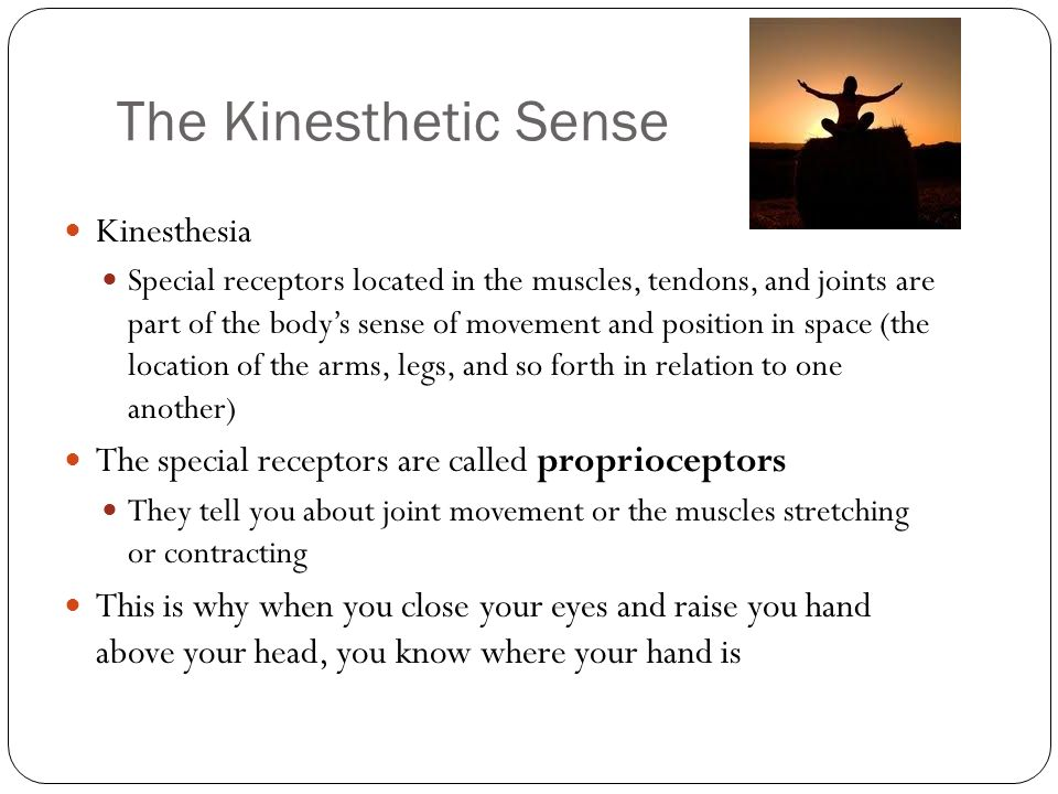the sensory receptors for kinesthesis are located in the Tb1 chapter 6- multiple choice sensory receptors that detect 182a) b) c) d) receptor cells for kinesthesis are located in the fovea.