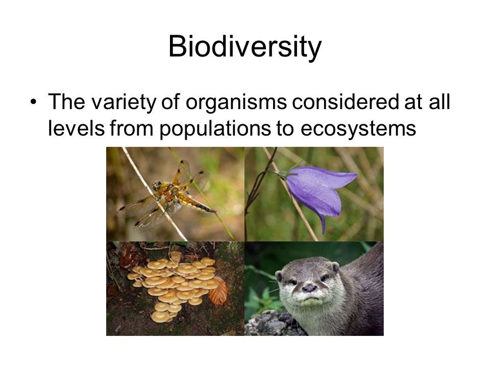 Biodiversity The variety of organisms considered at all levels from populations to ecosystems