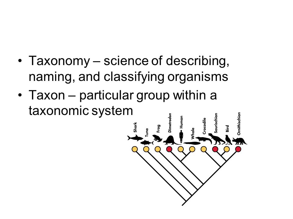 Taxonomy – science of describing, naming, and classifying organisms