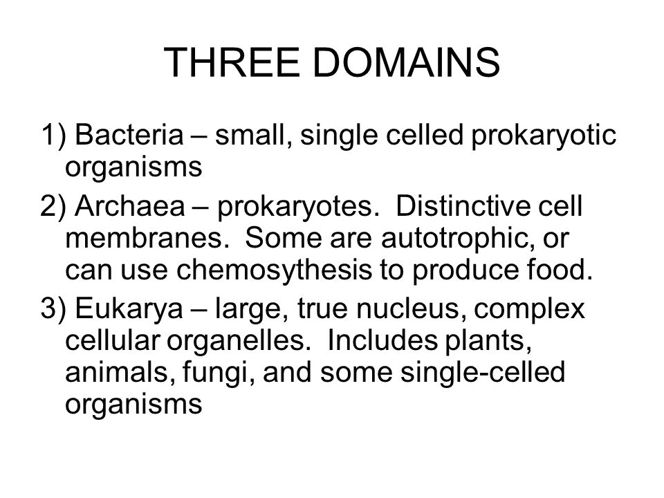 THREE DOMAINS 1) Bacteria – small, single celled prokaryotic organisms