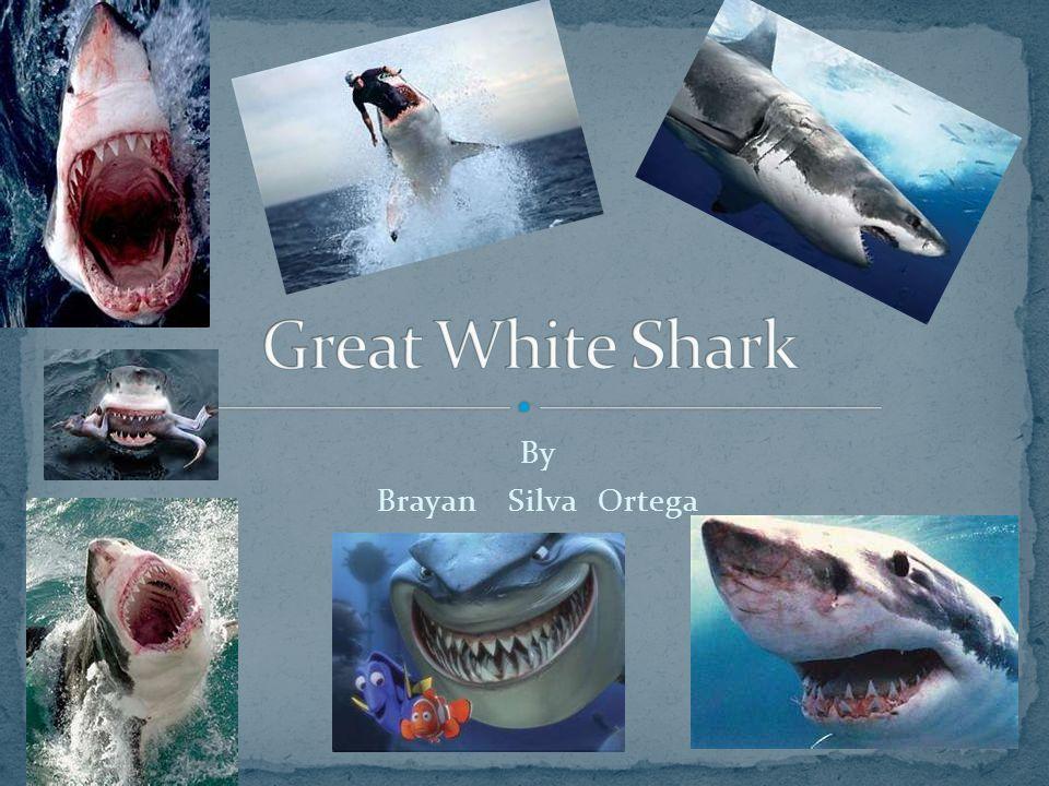 Great White Shark By Brayan Silva Ortega