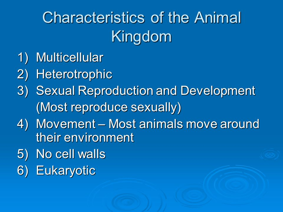 Characteristics of the Animal Kingdom