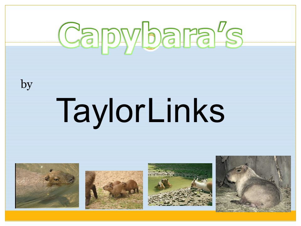 Capybara's by Taylor Links