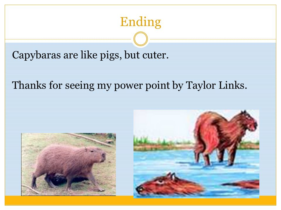 Ending Capybaras are like pigs, but cuter. Thanks for seeing my power point by Taylor Links.