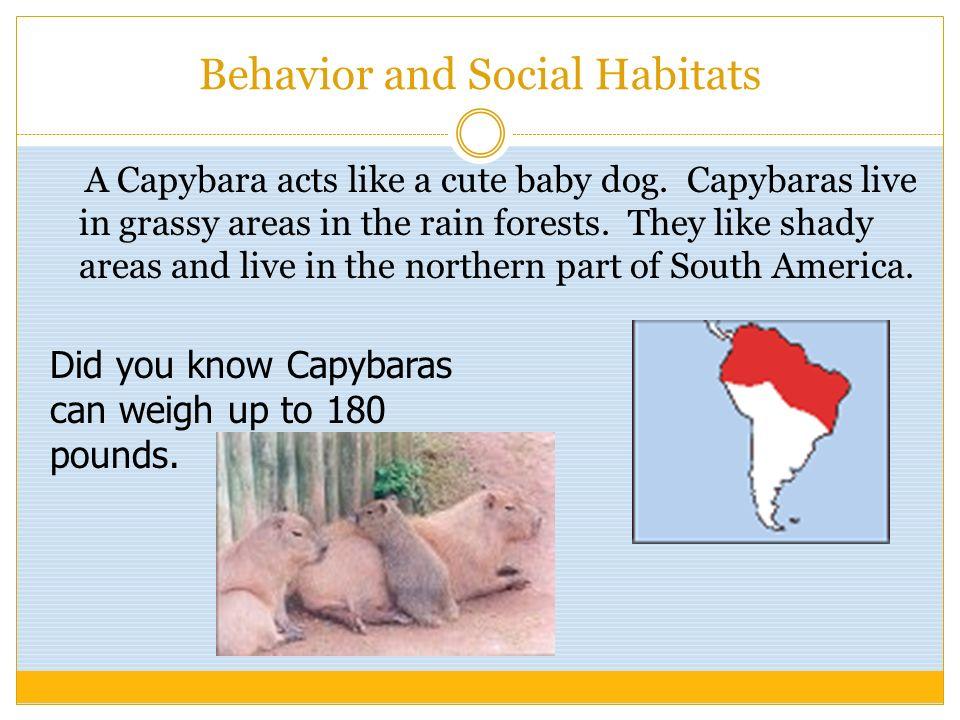 Behavior and Social Habitats
