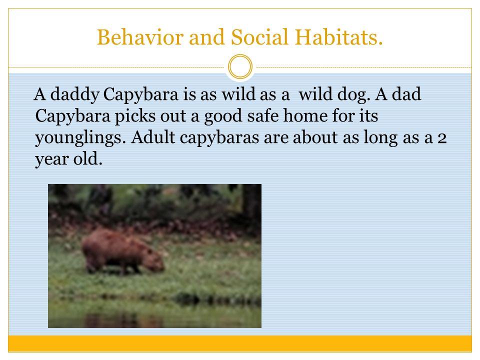 Behavior and Social Habitats.