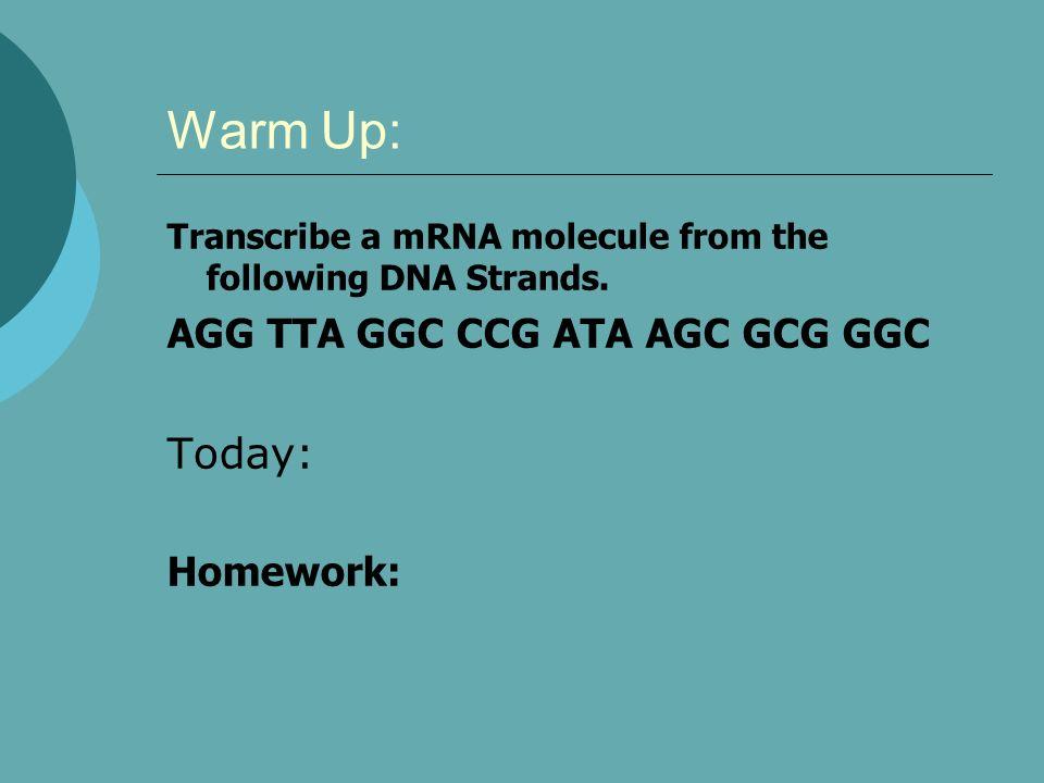 Warm Up: Today: AGG TTA GGC CCG ATA AGC GCG GGC Homework: