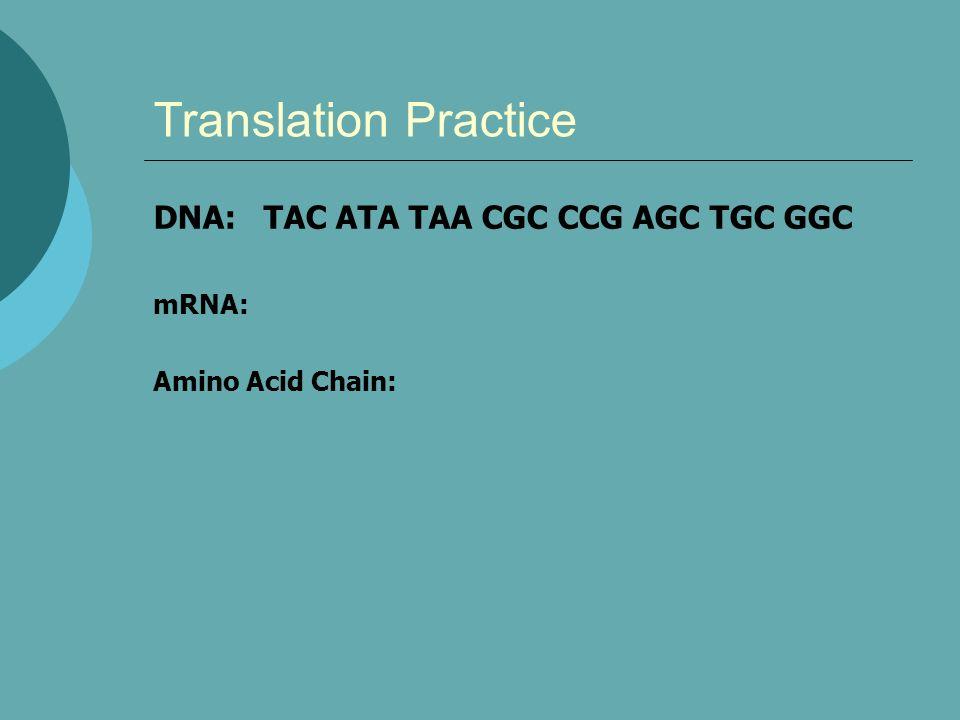 Translation Practice DNA: TAC ATA TAA CGC CCG AGC TGC GGC mRNA: