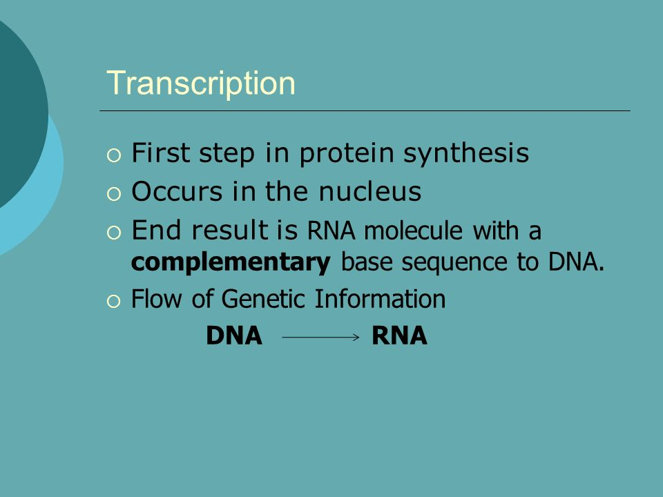Transcription First step in protein synthesis Occurs in the nucleus