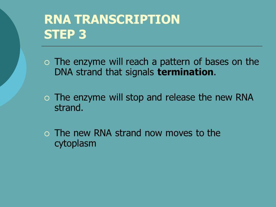 RNA TRANSCRIPTION STEP 3